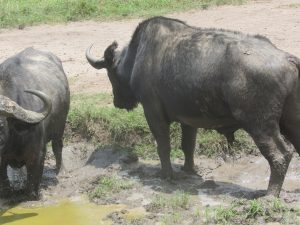 guide to murchison falls